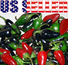 30+ ORGANICALLY GROWN Black Hungarian Hot Pepper Seeds Heirloom RARE NON-GMO USA