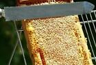 PURE BEESWAX 100% ALL NATURAL CHEMICAL-FREE BEE's WAX FROM MICHIGAN BEES