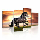 ANIMAL Horse 14 4A-RH Canvas Framed Printed Wall Art ~ More Size