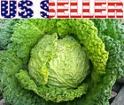 100+ ORGANICALLY GROWN Perfection Drumhead Savoy Cabbage Seeds Heirloom NON-GMO