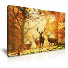 Highland Stags in Autumn Deer Animal Canvas Wall Art Print Deco 9 sizes