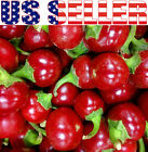 30+ ORGANICALLY GROWN Red Cherry Sweet Pepper Seeds Heirloom NON-GMO Ornamental
