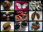Dried Fruit ,Nuts, Pods, Seeds, etc for crafts - Amazon / Tropical selection