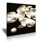FLOWER Orchid Canvas Framed Printed Wall Art 21 ~ More size