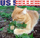 100+ ORGANICALLY GROWN Catnip Catmint Seeds Heirloom NON-GMO Herb Healthy Meow!