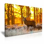 DEER In The Forest Canvas Framed Print 5 ~ More Size