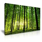 FOREST Large Green Tree Sun Canvas Wall Art Picture Print ~ More Size