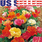 200+ California Mission Bells Poppy Mix Flower Seeds Beautiful Vivid Decorative