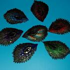 7 Peacock Iron On Sew Patch Embroidered Applique Sequins Bird Feather Biker Lots