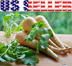 300+ ORGANICALLY GROWN GIANT Hollow Crown Parsnip Seeds Heirloom NON-GMO Parsley