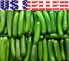 30+ ORGANICALLY GROWN Persian Beit Alpha Cucumber Seeds Heirloom NON-GMO Crispy!