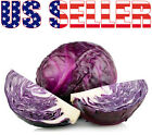 100+ ORGANICALLY GROWN GIANT Mammoth Red Rock Cabbage Heirloom NON-GMO Stores
