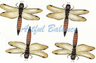 Ceramic Decals Dragonfly Dragonflies Bug Animal