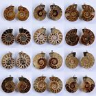 33-44mm Two matching ammonite fossil twins pendant *each pair photoed*