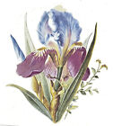 Ceramic Decals Purple Blue Iris Floral Flower image