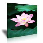FLOWER Lotus Canvas Framed Printed Wall Art 6 ~ More Size