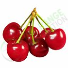 Montmorency Cherry Extract 10:1 Powder  -  100g , 250g , 500g , 1Kg , 5Kg, 10Kg