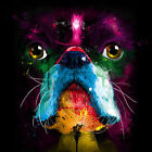 Pug Face Cute Dog Colourful Abstract WALL ART CANVAS FRAMED OR POSTER PRINT