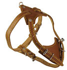 """Genuine Leather Dog Harness, 16.5""""-20"""" Chest size, 1/2"""" Wide, Boston Terrier"""