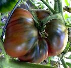 01 gram Black Krim Tomato Seed Heirloom No till OP OG Russian Origin