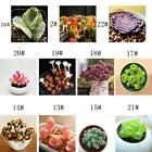 Fun 60PCS Seeds Mixed Succulents Seeds Rare Succulent Potted Plant Home Decor UP