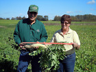 seed store locations - Groundhog™ Radish seed.  Store soil Nutrition, Great for no-till techniques!