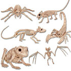Crazy Bonez Bones Skeleton Halloween Scary Party Rat Bat Spider Decoration Props