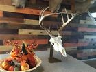 Amazeen Outdoors Table Top Mount European Skull Hanger Deer Hook Metal Steel