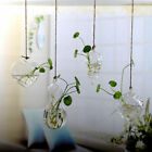 Us Home Decor Glass Flower Plant Stand Hanging Vase Ball Terrarium Container