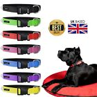 'Oneup Strong Nylon Dog Collar Pet Cat Puppy Adjustable Blue Black Pink Red