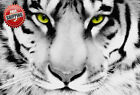 Animal Big Cat White Tiger Face Poster Print Wall Art Premium Modern Picture