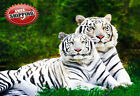 "Animal Big Cat Two White Tigers Poster Print Wall Art Picture Photo 30""x20"""