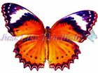 TRANSPARENT BUTTERFLY 2, CUT (8)  or UNCUT PACK (16) suncatcher scrapbooking 3d