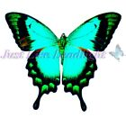 TRANSPARENT BUTTERFLY 7, PRE-CUT or SHEET suncatcher scrapbooking craft 3d