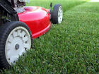 LOW MAINTENANCE LAWN Amenity Grass Seed Mix WITHOUT RYEGRASS Slow Growing Lawn