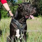 Great Dane Harness for Large Dog Breeds | Large Dog Harness for The Best Control