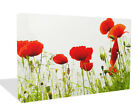 FLORAL CANVAS ARTWORK RED POPPIES ON WHITE ART CANVAS PRINT