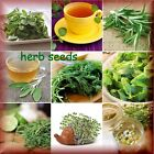 Choose Herb Seeds 35 Varieties BEST QUALITY Aromatic Medicinal  Garden Plants