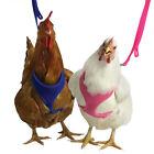 Walk Your Chicken Harness (Take 'em for a Walk), Leash SOLD Separately
