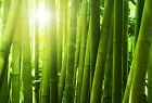 Bamboo Soap / Candle Making Fragrance Oil 1 - 16 Ounce ***Free Shipping***