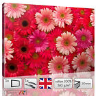 LARGE RED AND PINK DAISY GERBERA FLOWERS PETALS CANVAS WALL ART PRINTS PICTURES