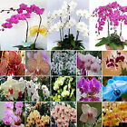Fab 100Pcs Orchid Ideal Garden Potted Seeds Rare Flower Plant Ornamental Various