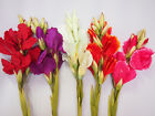 Artificial Simulation Flowers Pink /White/purple/Green Home Decor Brand New100cm