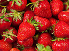 Strawberry Patch Soap / Candle Making Fragrance Oil 1-16 Ounce **FREE SHIPPING**