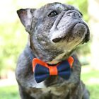 Burnt Orange and Navy Bow Tie for Dogs (UOH) - FREE SHIPPING