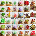 Home Garden - Simulation Mini Plastic Succulents Scindapsus Plants Garden Home Office Decor