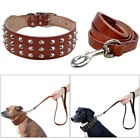 Best Leather Spiked Studded Dog Collars and Leads Durable for Small Large Dogs