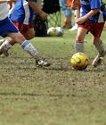 FOOTBALL PITCH REPAIR & OVER SEEDING Amenity Grass Seed for Quality Sports Turf