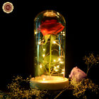 Enchanted Rose Flower Lamp  Valentine's Gift For She/He-Beauty and The Best