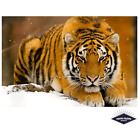 Siberian Tiger In The Snow Poster Quality Print 260gsm Premium Poster Paper